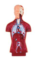 Anatomía Humana-1