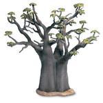Wt Baobab Africano / African Baobab