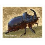 Cromo 47 Escarabajo