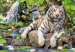 Puzzle Tigres Blancos De Bengala 1000 Piezas